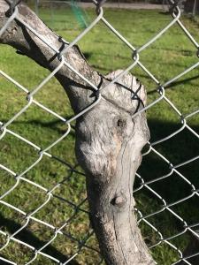 generic-fence-tree